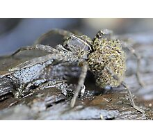 Wolf Spider and babies Photographic Print
