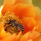 Desert Bee by Diana Graves Photography