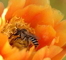 Desert Bee by K D Graves Photography