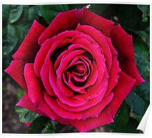 A Maze of a Rose Poster