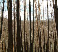 Joe Mortelliti Gallery - Burnt out Alps, near the Basalt Knob Track, Victoria, Australia. by thisisaustralia