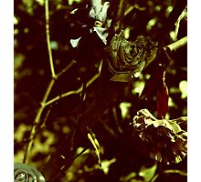withered Photographic Print