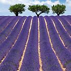 Provence by Chantal Seigneurgens
