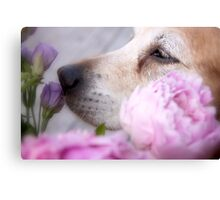 Smell the flowers Canvas Print