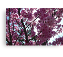 Blossoms up Close 2 Canvas Print