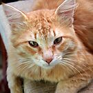 Street Cat - Ginger Tom by taiche