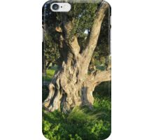 An Old Olive Tree iPhone Case/Skin