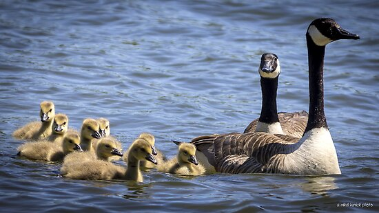 A Family Outing on the Bay by Mikell Herrick