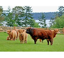 Highland Family Photographic Print