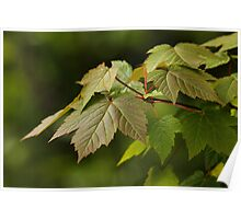 Fresh Foliage for Spring Poster