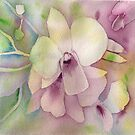 Orchids by Deborah Pass