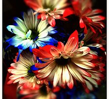 Red white and blue by DonaldCole