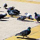 1491-pigeons in park by elvira1