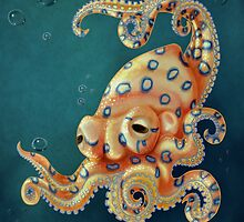 Blue-ringed Octo by Wolf Gibbson