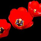 1499-red tulips by elvira1