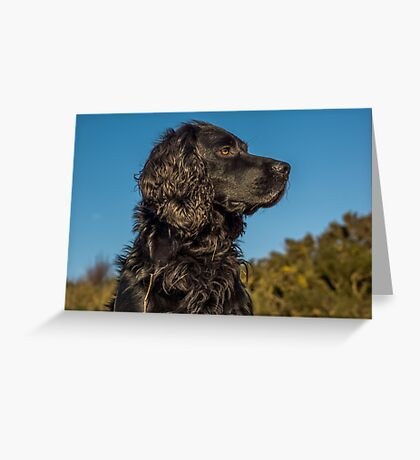 Animal, Dog, Cocker Spaniel, Black Greeting Card