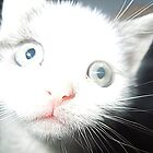 Kitten by jomash