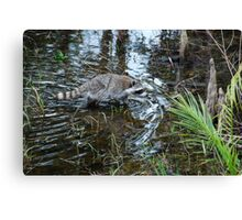 Wading  Canvas Print