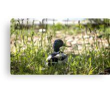 Quack Grass Canvas Print