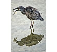 Low Tide Snack Photographic Print