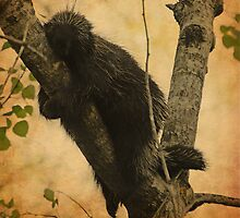 Porcupine by lumiwa