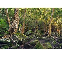 Perch Ponds Track Photographic Print