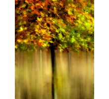 Autumnal Tree Photographic Print