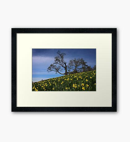 The Old tree and the Daffodils Framed Print