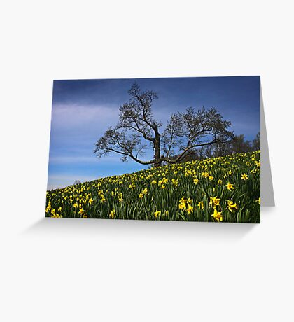 The Old tree and the Daffodils Greeting Card
