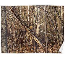 Deer Peeking Poster
