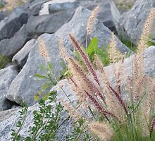 Reeds and Lagoon by photosbyamy