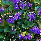 1511-violet in my garden by elvira1