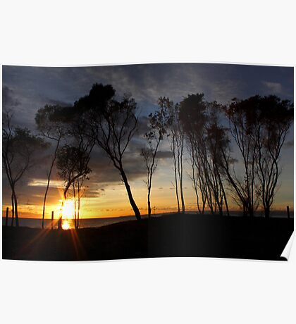 Tree Lined Sunrise Poster