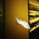 Art Fish - Lomo by Yao Liang Chua