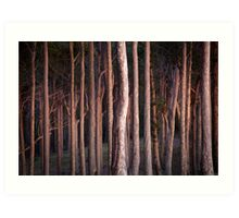 Morning Glow Spotted Gums Art Print