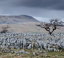 Whernside & the Limestone Fields, Yorkshire Dales National Park by strangelight