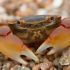 Mr. Crab by Etwin