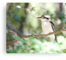 Kookaburra sits in the ole gum tree...   Canvas Print