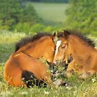 Two Connemara pony foals by Manfred Grebler