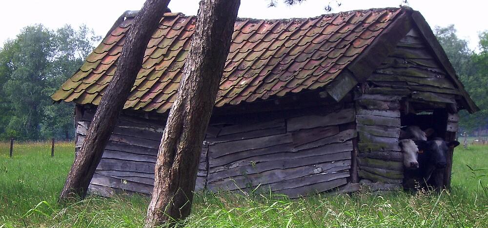 Sweet home. by alaskaman53