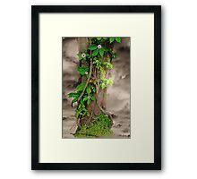 The Spring Tree Framed Print