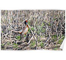 Pheasant's Forever Poster