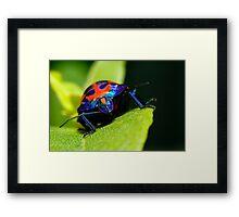 Stink bug 007 Framed Print