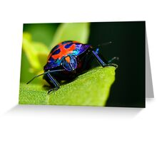 Stink bug 007 Greeting Card