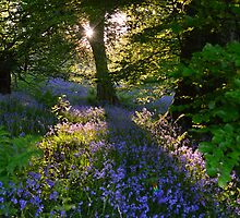 Bluebell Sunset 2 by Ian Mac