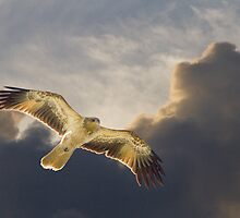 Riding The Thermals by byronbackyard