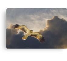 Riding The Thermals Canvas Print
