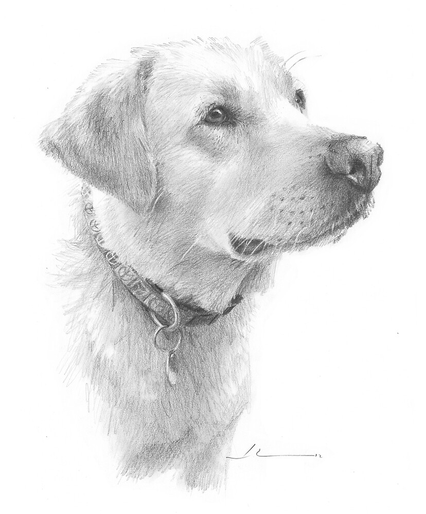Yellow lab drawing by Mike Theuer