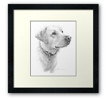 Yellow lab drawing Framed Print