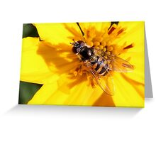 Hoverfly (3) Greeting Card